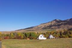 белизна га-н s фермы Стоковое Изображение RF
