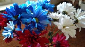 белизна голубого красного цвета Стоковые Изображения