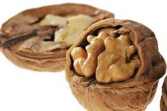 белизна грецкого ореха предпосылки Стоковые Изображения RF