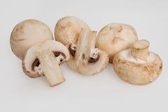 белизна гриба предпосылки изолированная champignon Стоковое фото RF