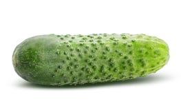 белизна еды огурца предпосылки свежая зеленая изолированная вегетарианская Путь клиппирования Стоковое Изображение