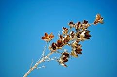 Белизна зашкурит Неш-Мексико Стоковое фото RF
