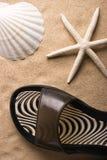 белизна звезды моря Стоковое Изображение RF