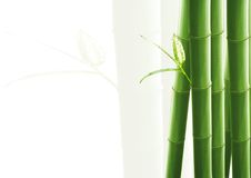 белизна изолированная бамбуком Стоковое Фото
