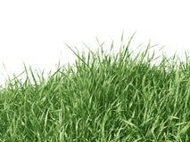 белизна изолированная травой Стоковая Фотография