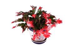 белизна изолированная цветком Стоковая Фотография