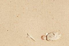 белизна камня раковины моря песка Стоковое Изображение RF