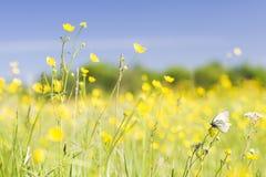 белизна капусты бабочки Стоковая Фотография