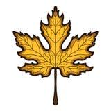 белизна клена листьев осени изолированная предпосылкой Эскиз нарисованный рукой покрашенный Стоковое Изображение