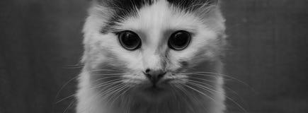 белизна кота коробки предпосылки Стоковые Фото