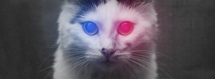 белизна кота коробки предпосылки Стоковые Фотографии RF