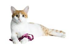 белизна кота красная Стоковые Фото