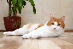 белизна кота милая лежа красная стоковое изображение rf