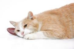 белизна кота предпосылки Стоковые Изображения