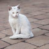 белизна кота Стоковые Фотографии RF