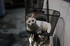 белизна кота Стоковые Фото