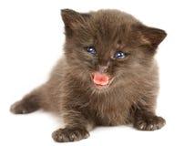 белизна котенка предпосылки малая Стоковая Фотография