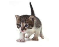 белизна котенка предпосылки младенца милая Стоковые Фото