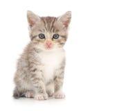 белизна котенка предпосылки Стоковое фото RF