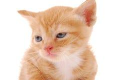 белизна котенка предпосылки Стоковое Фото