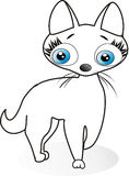 белизна котенка Стоковые Фотографии RF