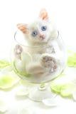 белизна котенка Стоковое Изображение