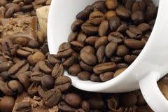 белизна кофейной чашки фасолей Стоковые Изображения