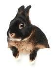 белизна кролика портрета предпосылки младенца