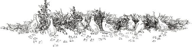 Белизна куропатки, приполюсная Стоковая Фотография RF
