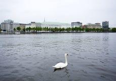 белизна лебедя озера hamburg alster стоковое изображение rf