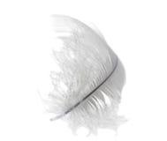 белизна лебедя пера светлая Стоковая Фотография RF