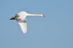 белизна лебедя полета Стоковое Изображение RF