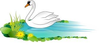 белизна лебедя Стоковая Фотография RF