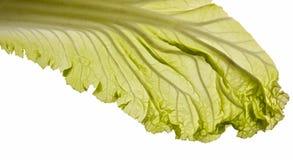 белизна листьев капусты китайская Стоковое Фото