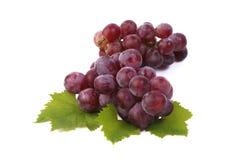 белизна листьев предпосылки изолированная виноградиной красная Стоковое Изображение RF