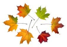 белизна листьев предпосылки Стоковые Изображения RF