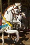 белизна лошади carousel стоковые фото