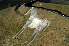 белизна лошади Стоковые Фотографии RF