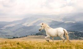 белизна лошади Стоковое Изображение