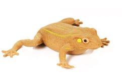 белизна лягушки Стоковое Изображение