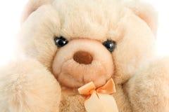 белизна медведя предпосылки стоковая фотография rf