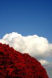 белизна места голубого красного цвета Стоковая Фотография RF