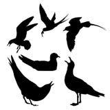 белизна моря чайки предпосылки иллюстрация штока