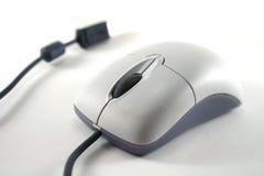 белизна мыши Стоковая Фотография RF