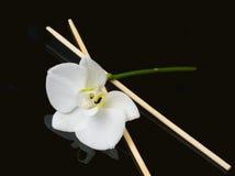 белизна орхидеи палочек Стоковое Изображение