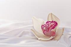 белизна орхидеи silk Стоковые Изображения RF