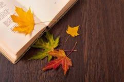 белизна осени изолированная принципиальной схемой Книга и красочные листья осени стоковые фото