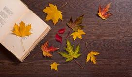 белизна осени изолированная принципиальной схемой Книга и листья осени Сентиментальная поэзия стоковое фото rf
