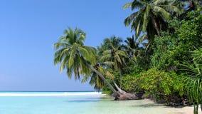 белизна пальмы океана пляжа Стоковые Изображения