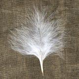 белизна пера материальная естественная малая Стоковые Фотографии RF